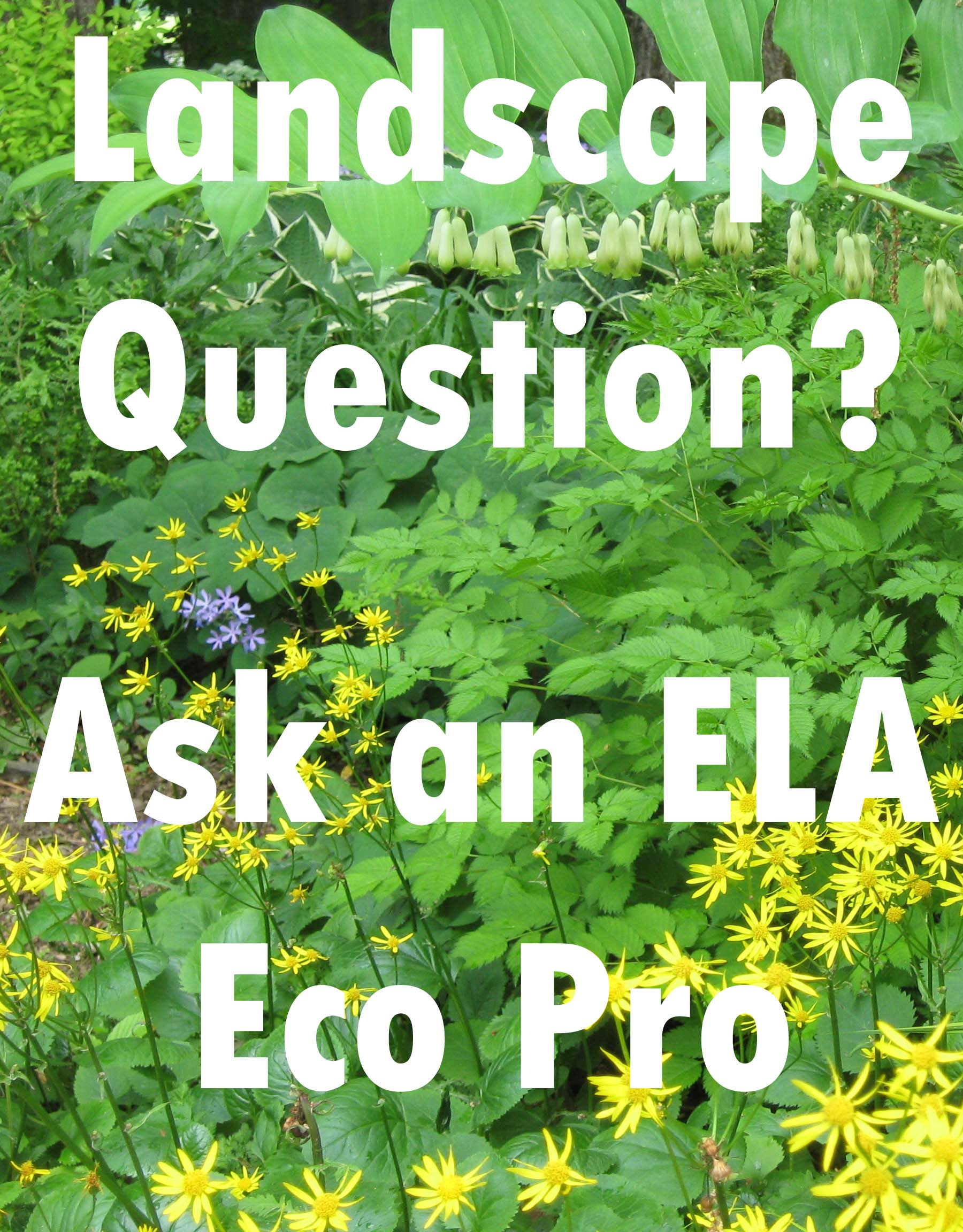 Ask an Eco Pro!