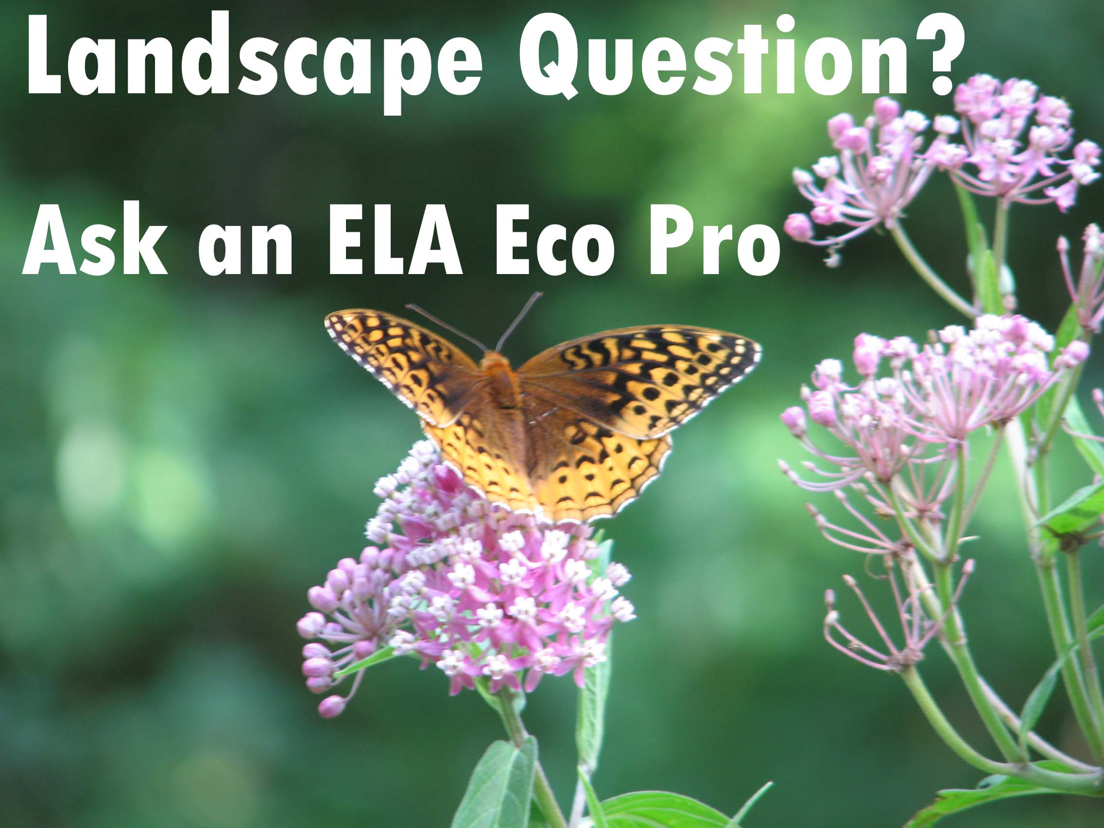 Ask an Eco Pro