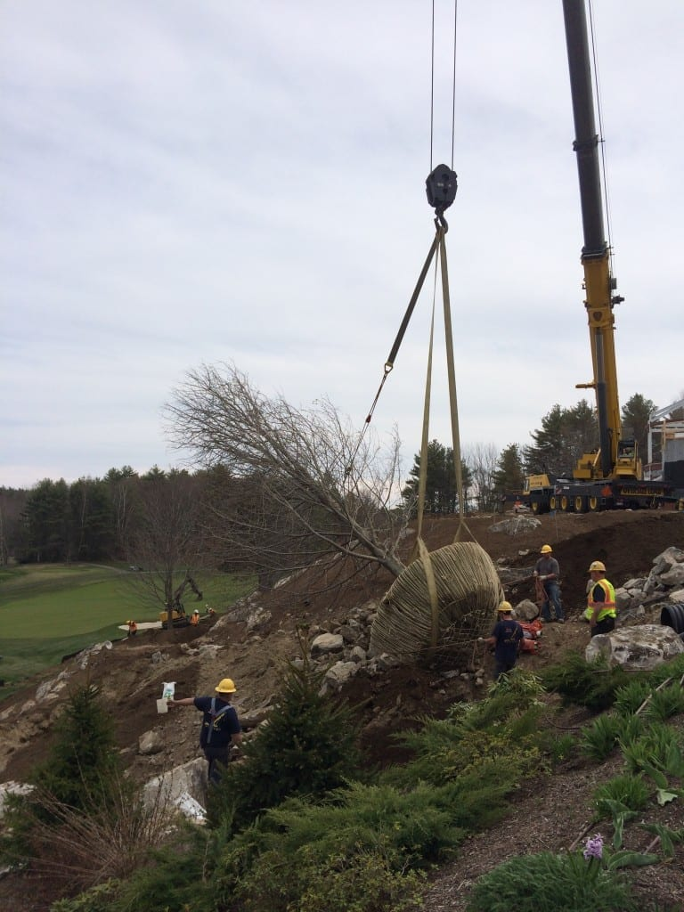 "A 12+ caliper tree installation at the Boothbay Harbor Country Club. We had 3 12+ caliper Maple trees transported from New York per request of a client wanting to create an ""established"" look for one of his current projects."