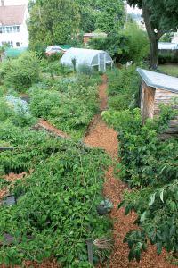 Paradise Lot - Edible Oasis