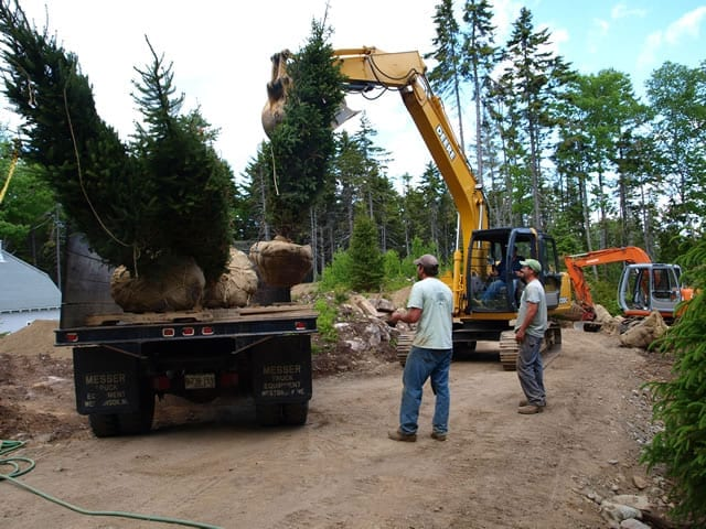 Some of our crew reforesting a large parcel of land that was damage in a large wind storm. Southport Island Maine.