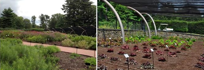 Formally unveiled in 2012, Mt. Cuba Center Trial Garden includes a shade structure that allows for trialing of forest understory species. Photo courtesy of Longwood Graduate Program.