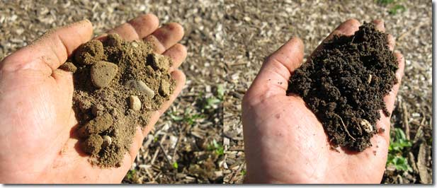 The soil we started with (left) and the soil we have ten years later.