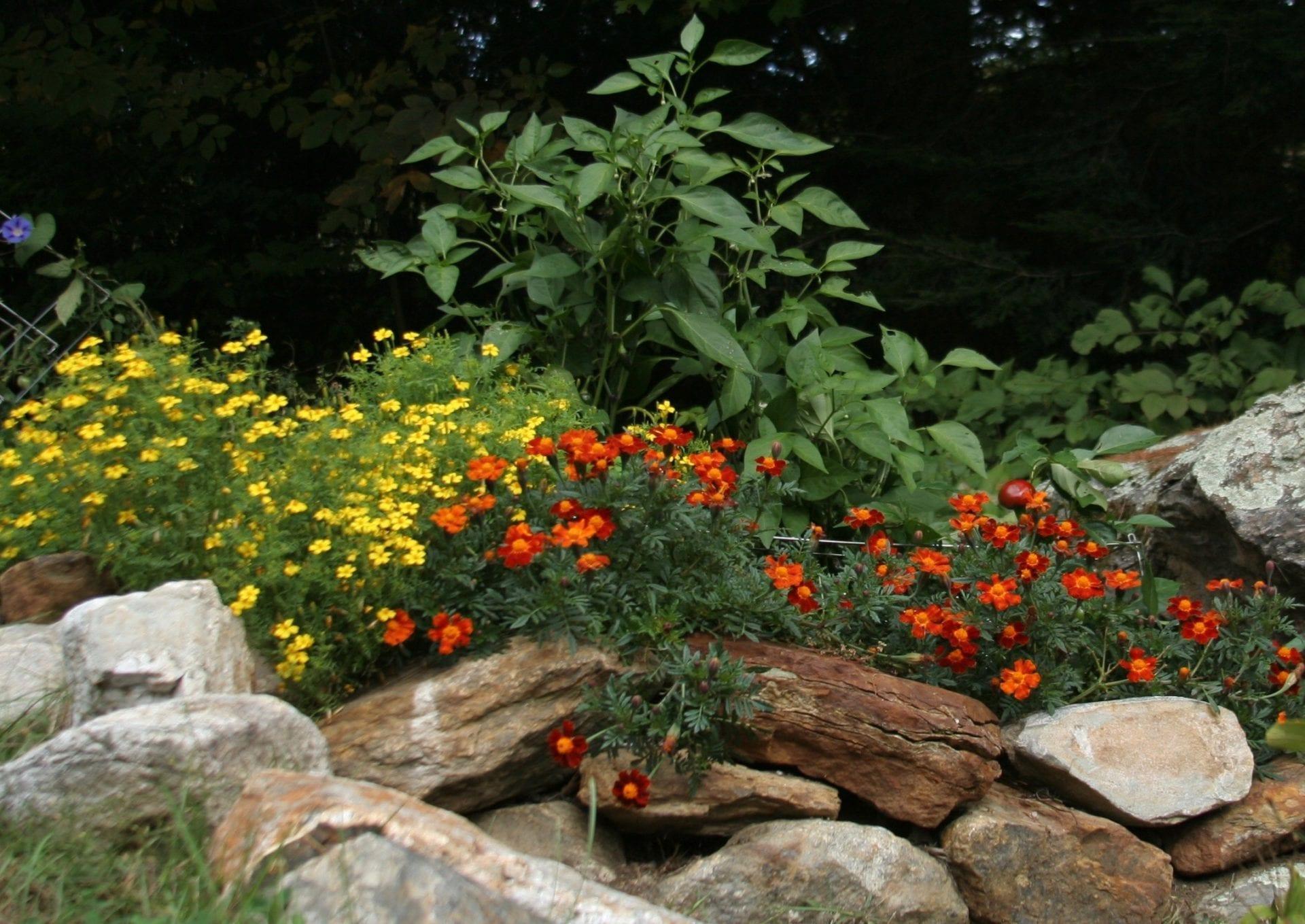 Creative environments landscape co edible gardens - Img_0972