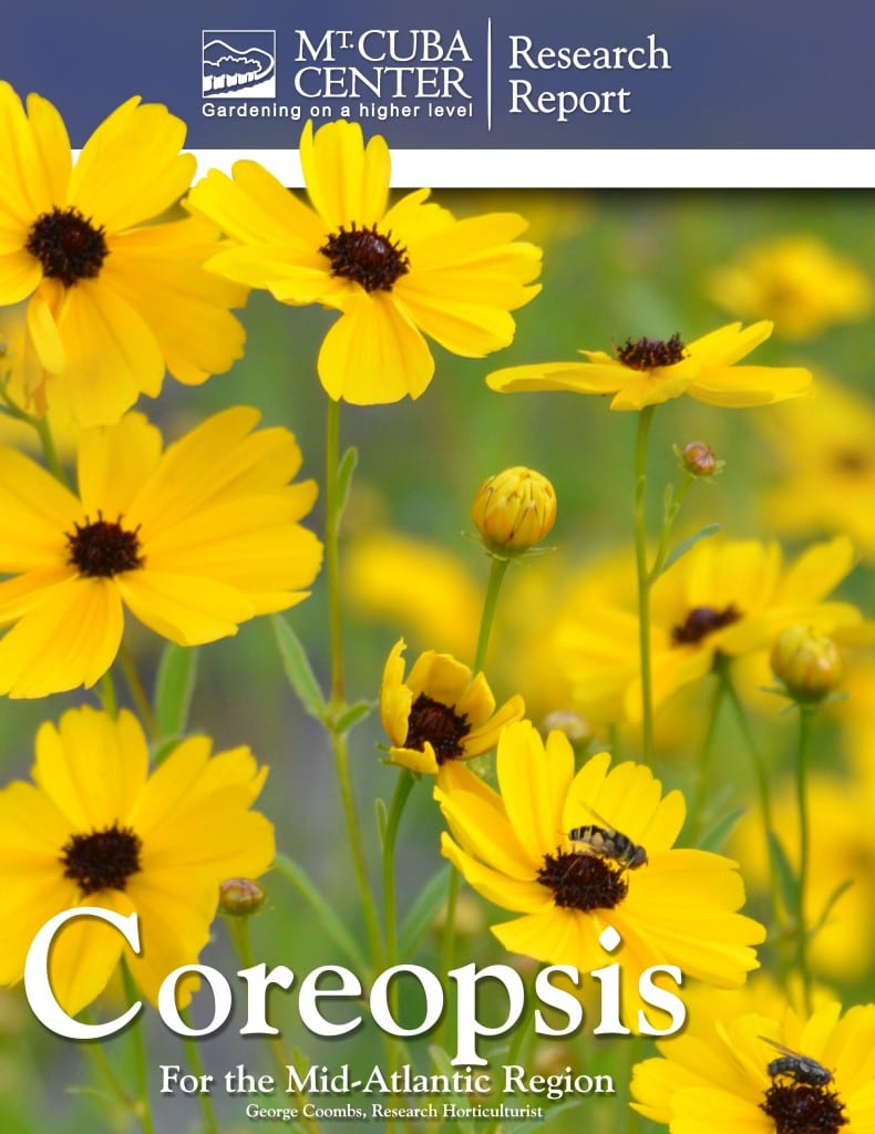 Coreopsis Cover
