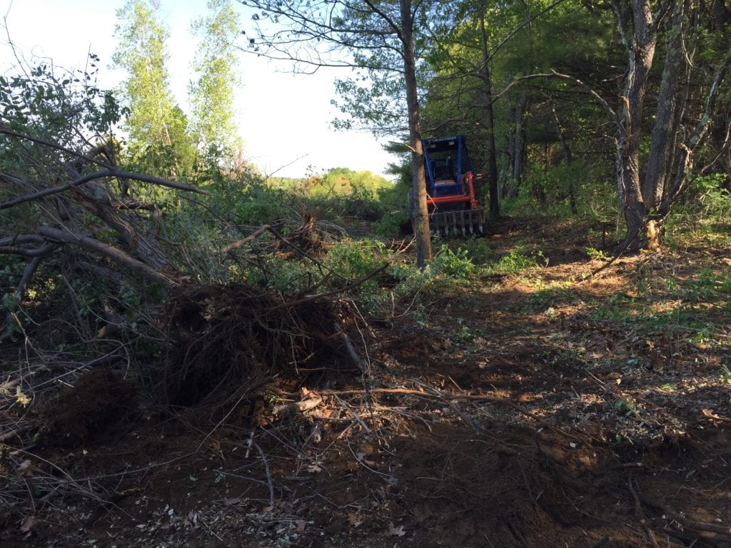 In May 2015, we removed invasive trees and shrubs on an additional 11 acres of the old East Field. Here uprooted buckthorn and invasive shrubs along the edge of the East field are ready for shredding. Often shredding is done immediately after uprooting.