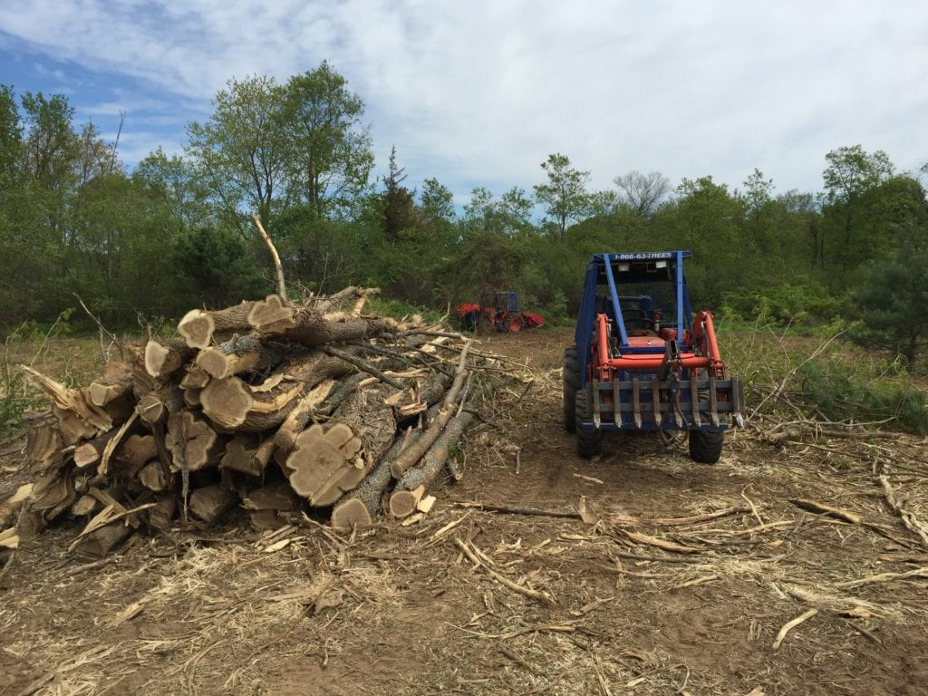 Using one of Forest Savers' tractors fitted with a Turbo Saw on the rear, we cut and piled the black locust.