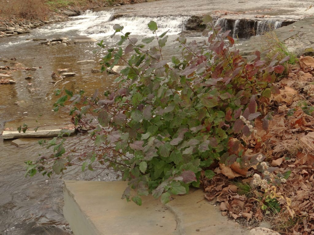On the upstream end of the gabions, a Fall Creek waterfall offers a beautiful autumn view.
