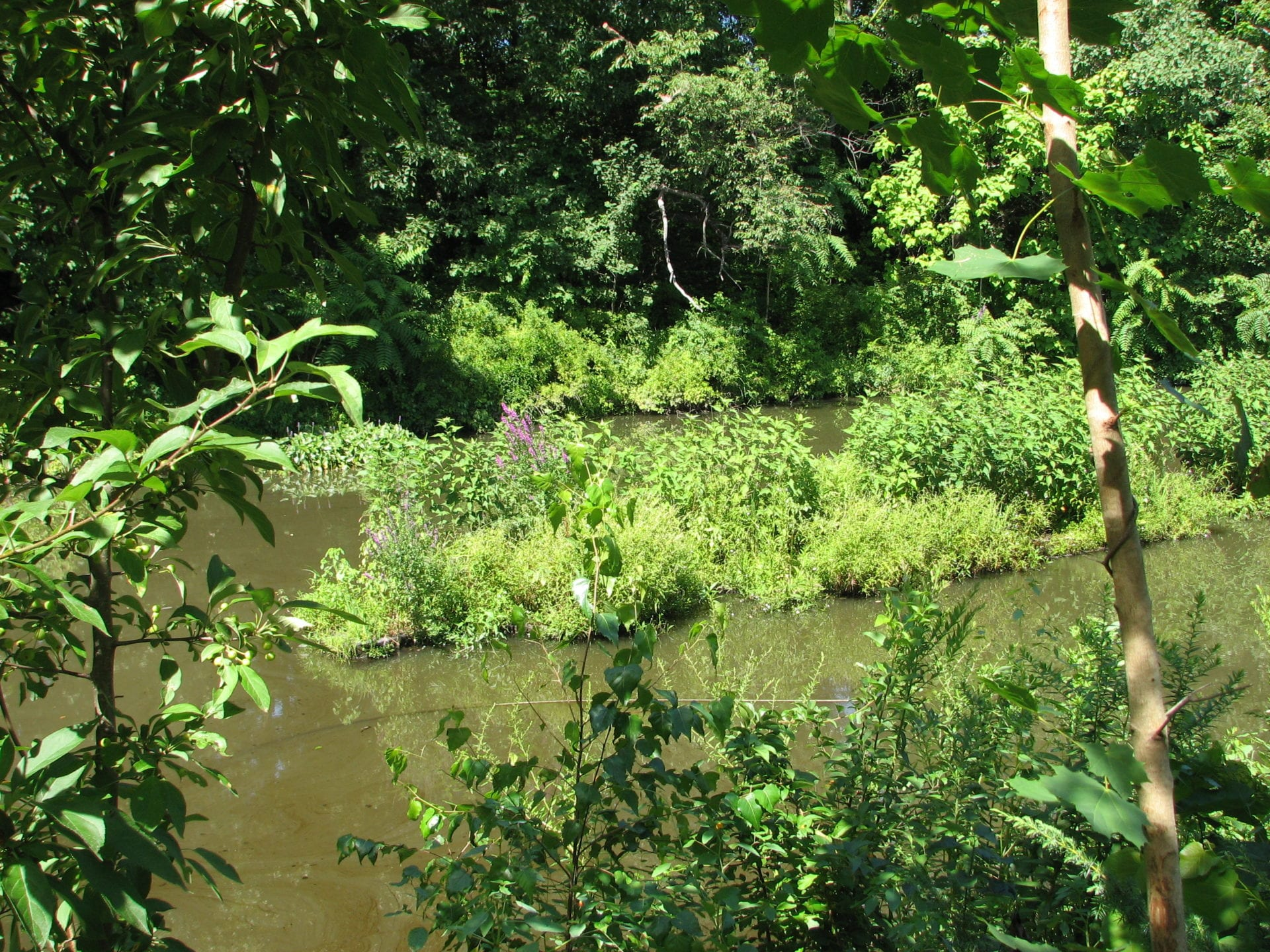 phytoremediation-canal-cleaning-island-of-plants