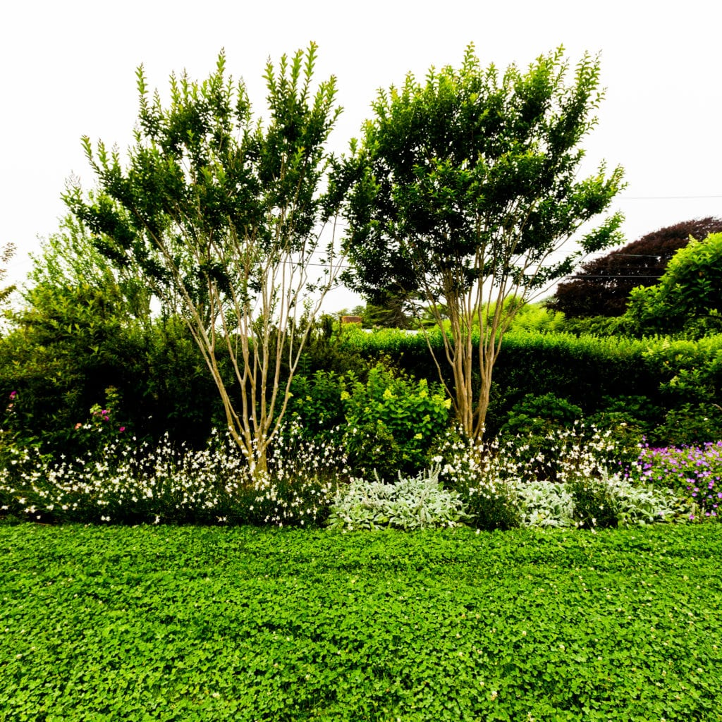 Clover lawns fix nitrogen, reducing the need for fertilizers, and provide an important food source for pollinators.