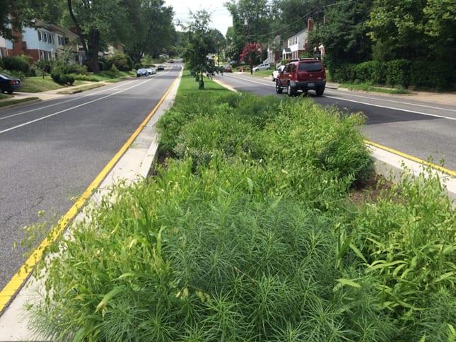 lovable, valuable green neighborhood infrastructure – Arlington, VA bioretention. Photo: Jon Ford.