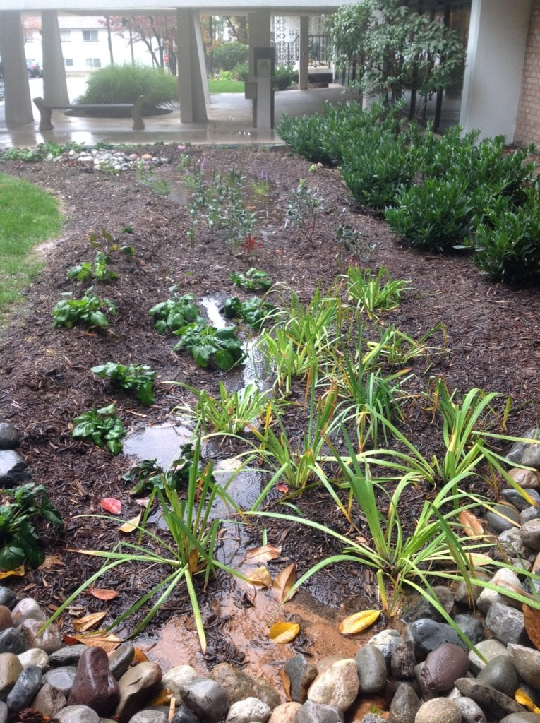 Waterford Rain Garden Right Side of Entrance