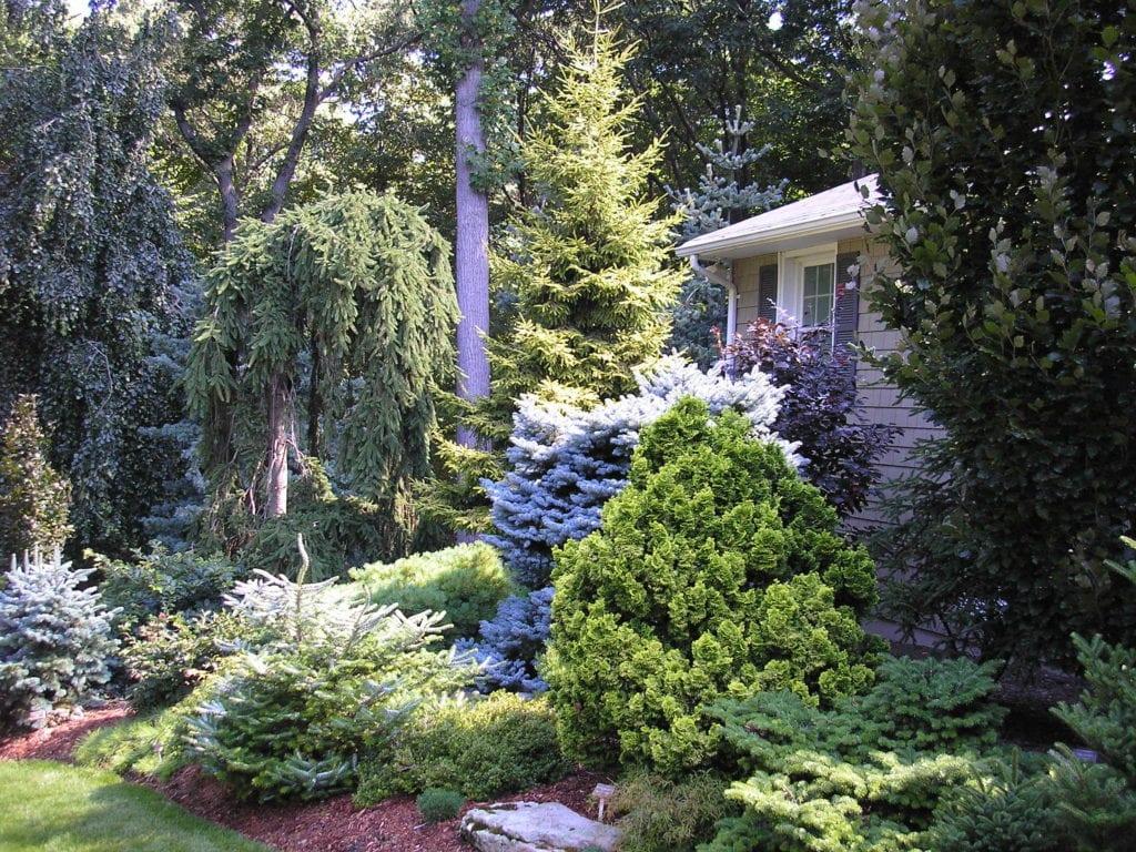 Árbol de coníferas al por mayor & amp; Cedar Trees MI | Granja de la corriente fría