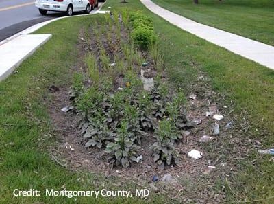 After a storm, sediment and debris fill a roadside rain garden.