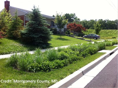 During the peak growing season, a well-cared-for roadside rain garden is functional and aesthetically pleasing.