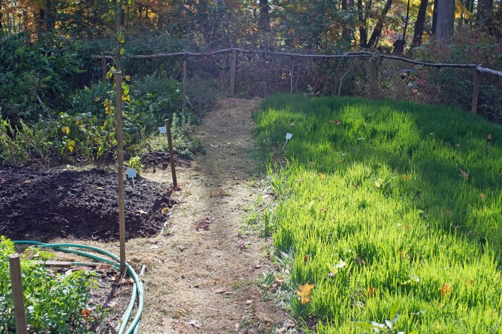 My vegetable garden is a place for quietness and relaxation, and offers a great opportunity to learn 'building soil' with green manures and compost.