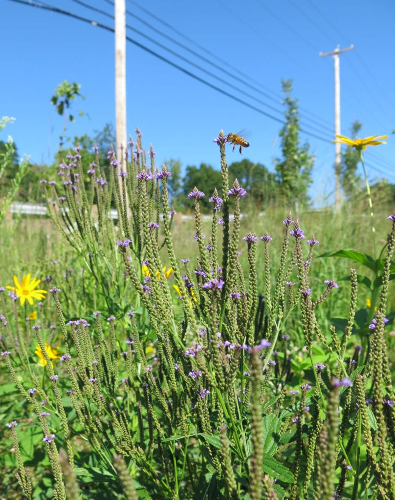 2.Roadside and utility rights-of-ways are ideal for providing food and habitat for pollinators and other insects.