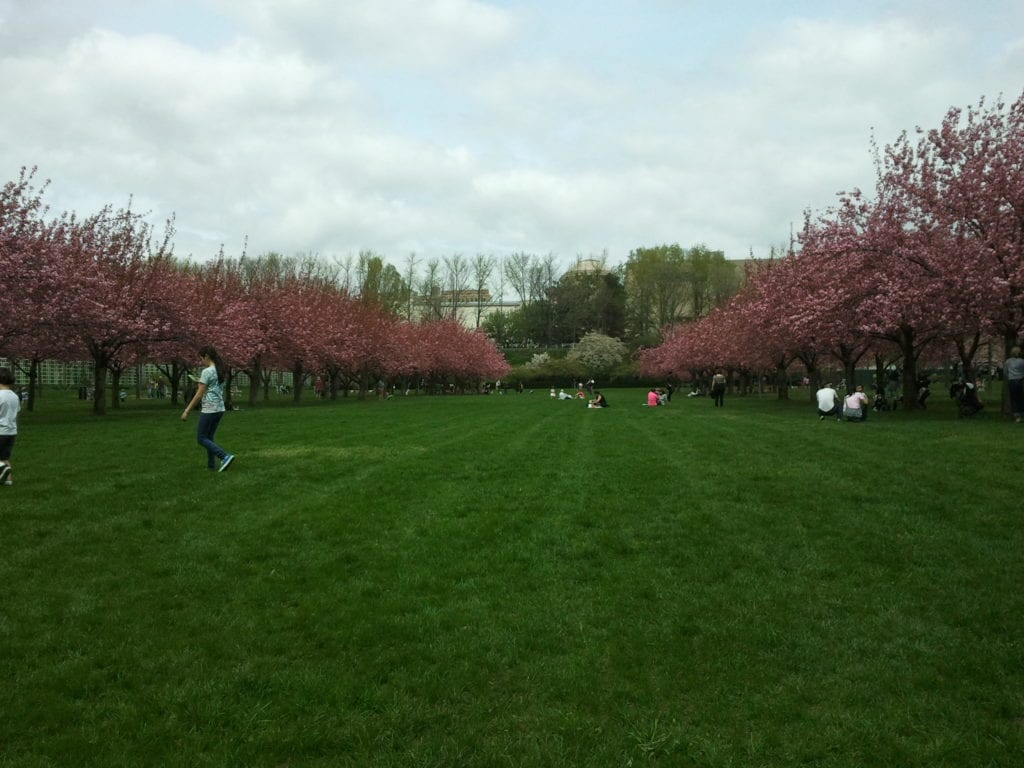 Cherry Esplanade at Brooklyn Botanic Garden in early spring, 2015.