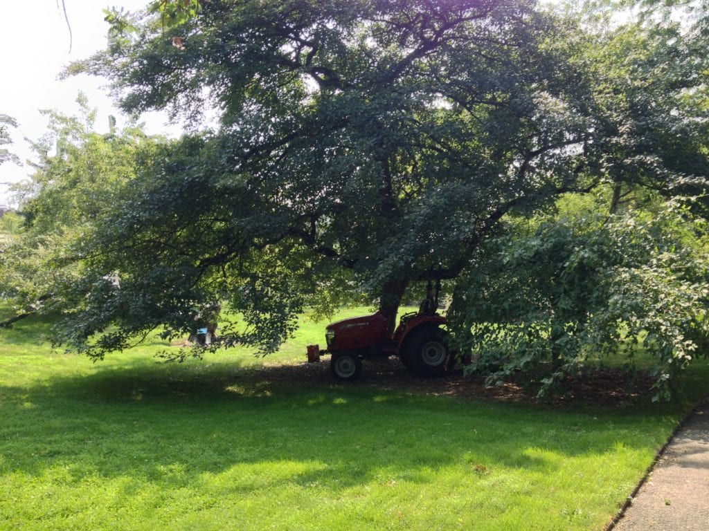 Parking a horticulture tractor in the shade beneath a tree is a convenience for the gardener working nearby, but takes a toll on the tree.