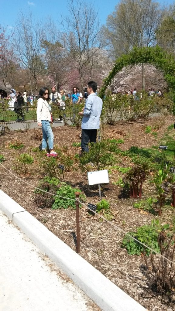 Visitors ignore the fencing and stand in a designated plant bed, on top of tender newly emerging perennials in the spring.