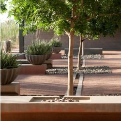 This campus design strives to educate about the unique water conditions of the Sonoran Desert in five different manifestations. Here, the Orchard Canal Court recalls traditional irrigation strategies (design:Ten Eyck Landscape Architects, Inc.; photograph:BLII Tinuneman).