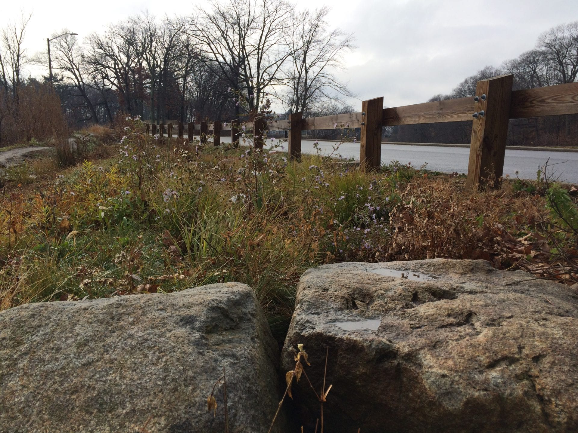 EcoTour Roger Williams Park Artful Stormwater Solutions