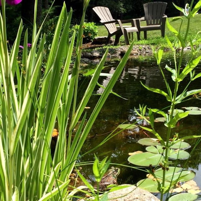 Sweetgrass Plants