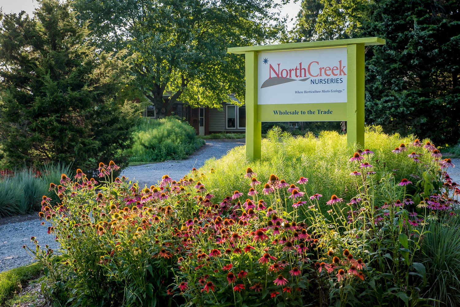 North Creek Is A Whole Propagation Nursery That Specializes In Growing Starter Plants And Plugs Of Perennials Ornamental Gres Ferns