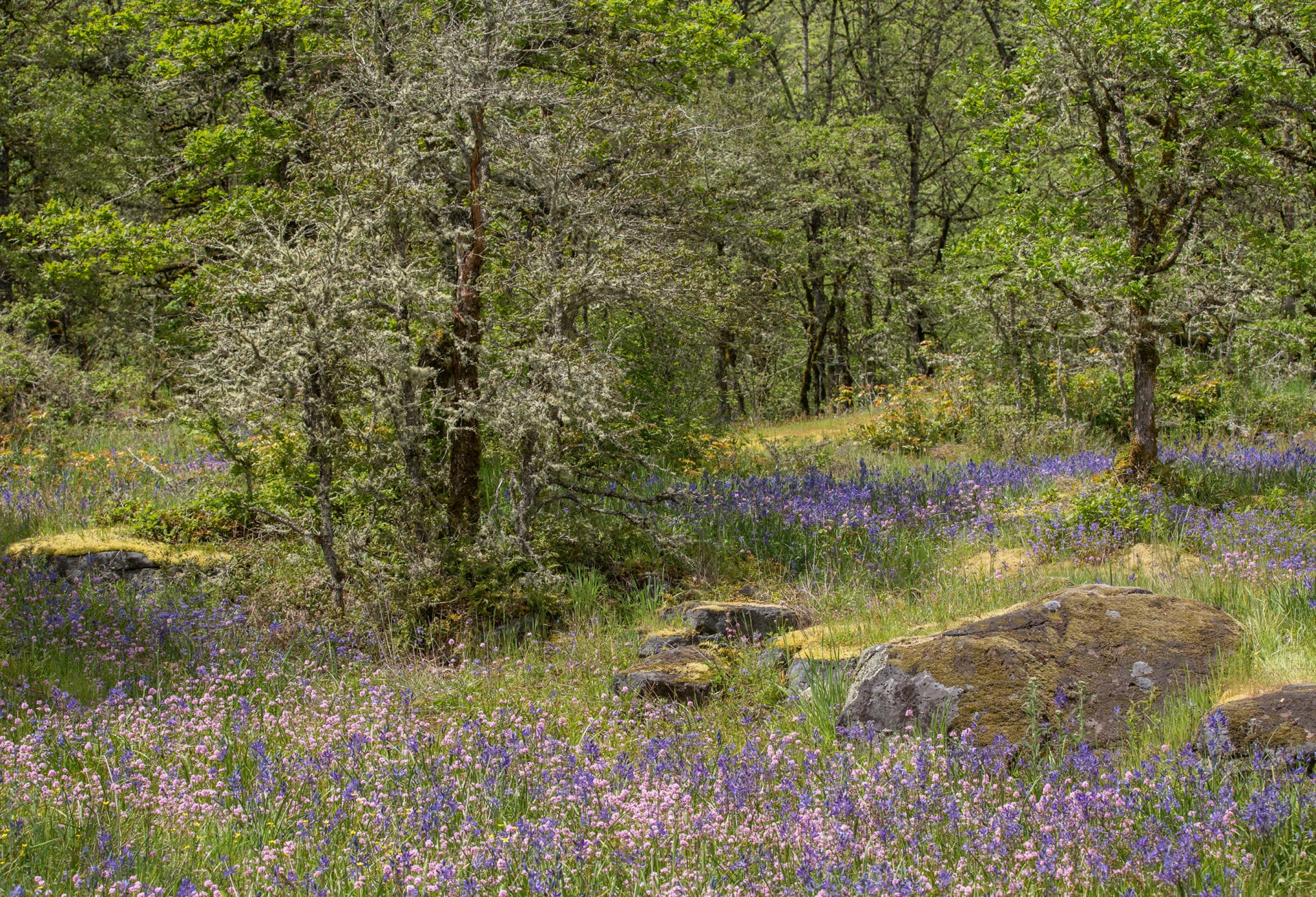 Prairie-Oak Ecosystems of the Pacific Northwest - Ecological ...