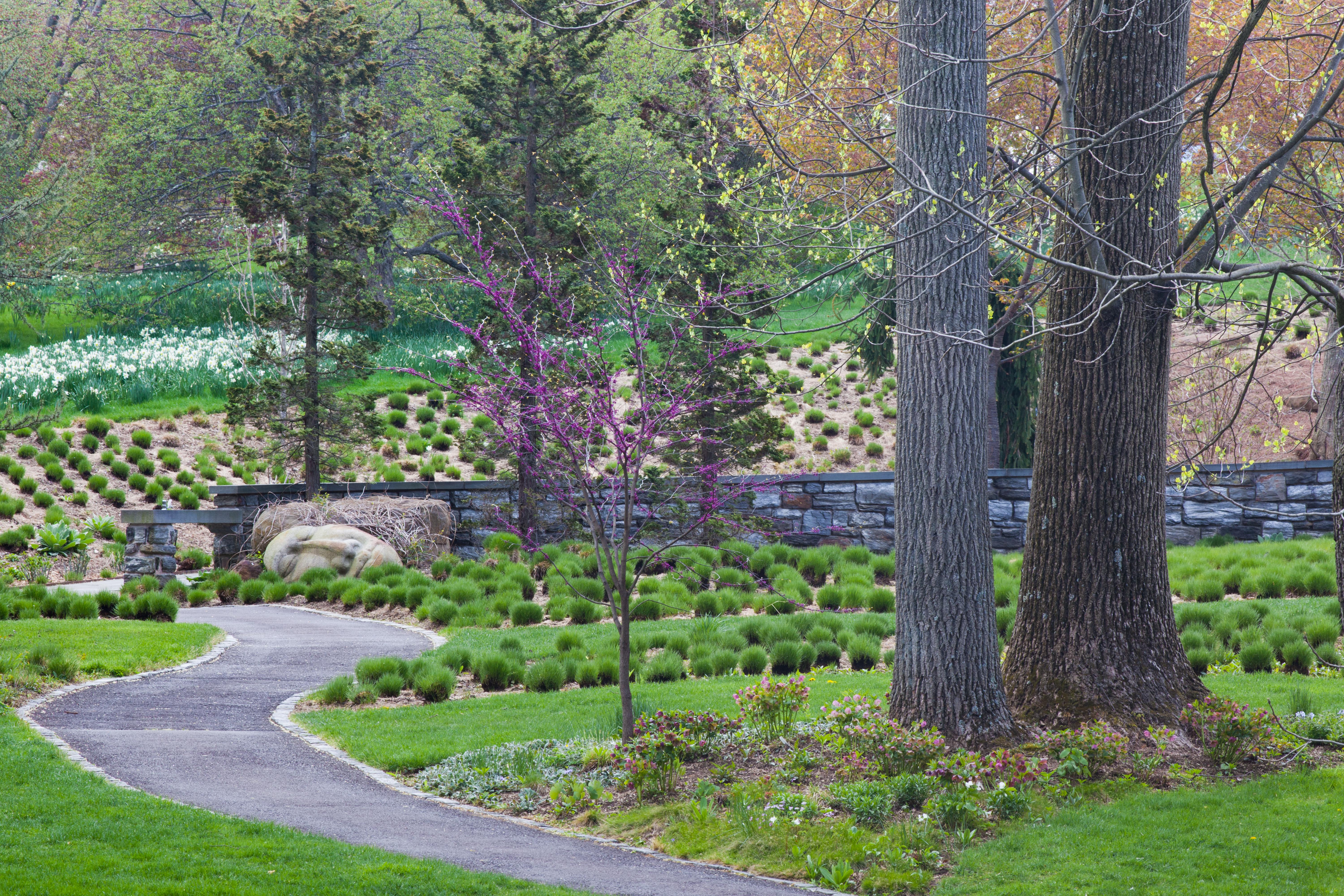 A Path Leads Past The Sporobolus Heterolepis Meadow, One Of Many Lawn  Alternative Areas Of The Gardens At Chanticleer Outside Philadelphia, PA.
