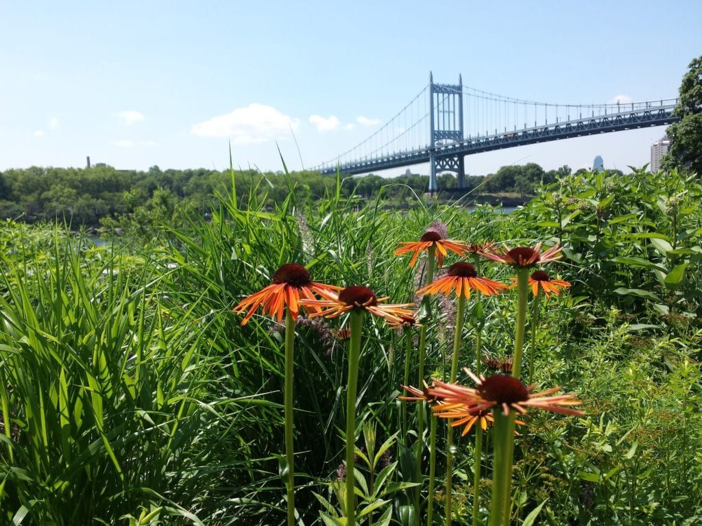 The trees at brooklyn botanic gardens ecological landscape alliance for Brooklyn botanical garden tickets