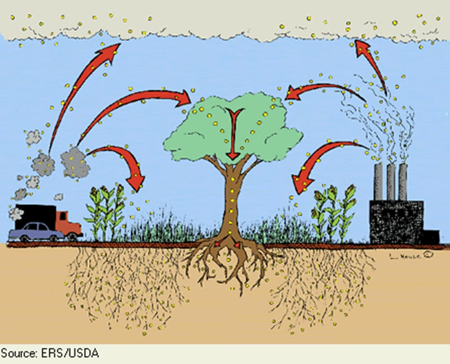 Gardening Healthy Soil And Carbon Sequestration