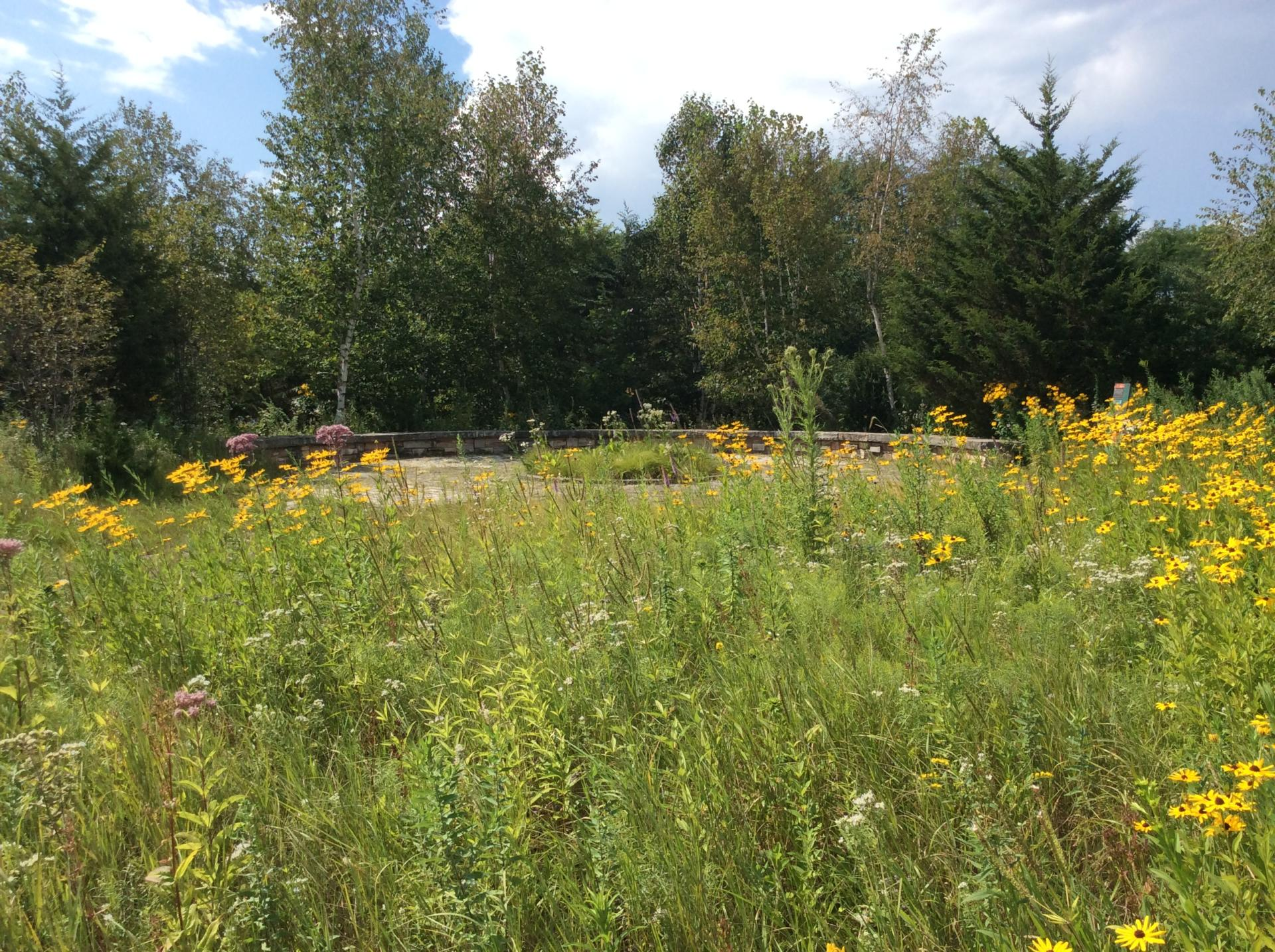 native plant garden design in wisconsin