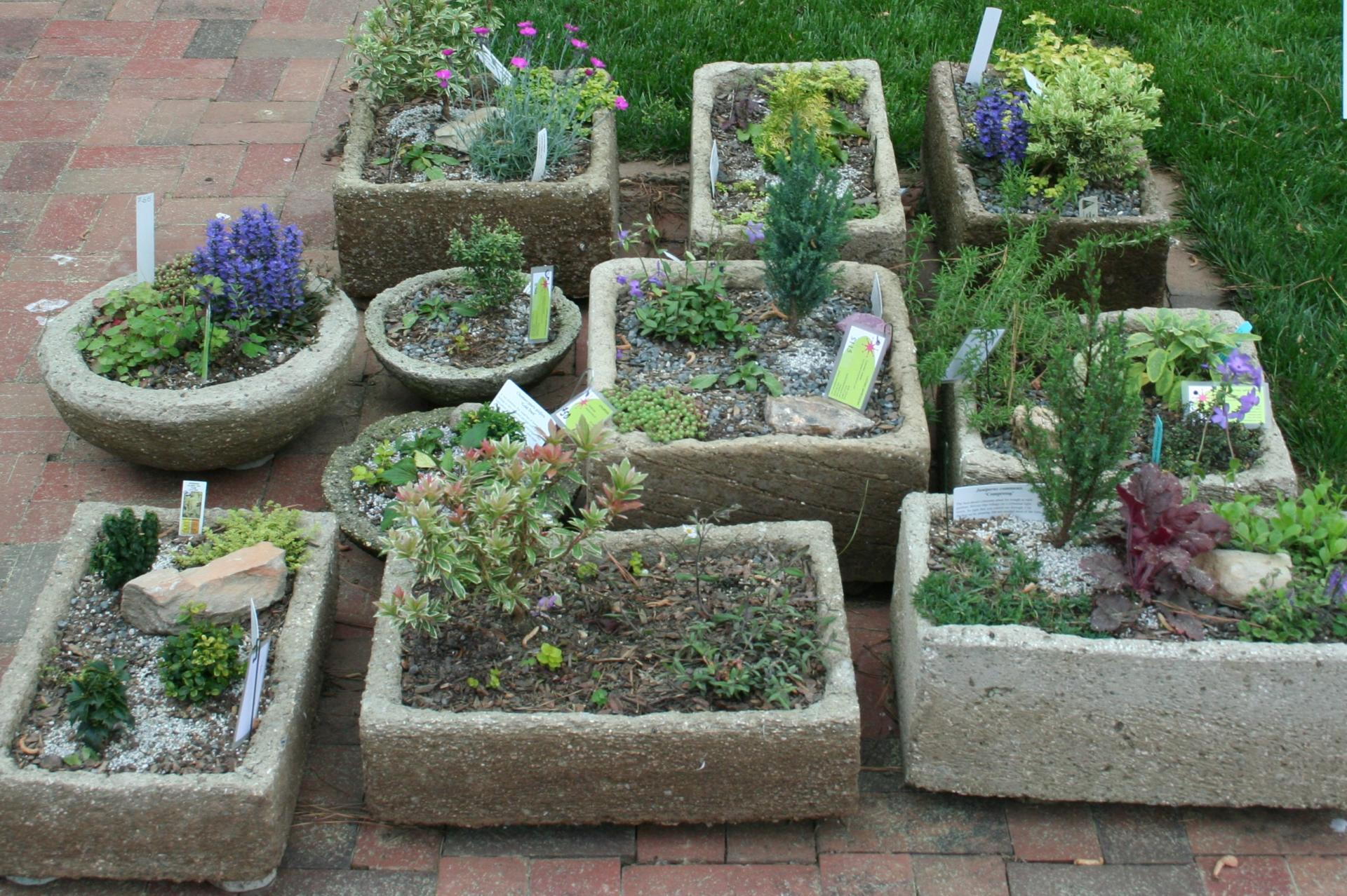 Superbe Drought Tolerant Container Gardens, Beyond The Traditional