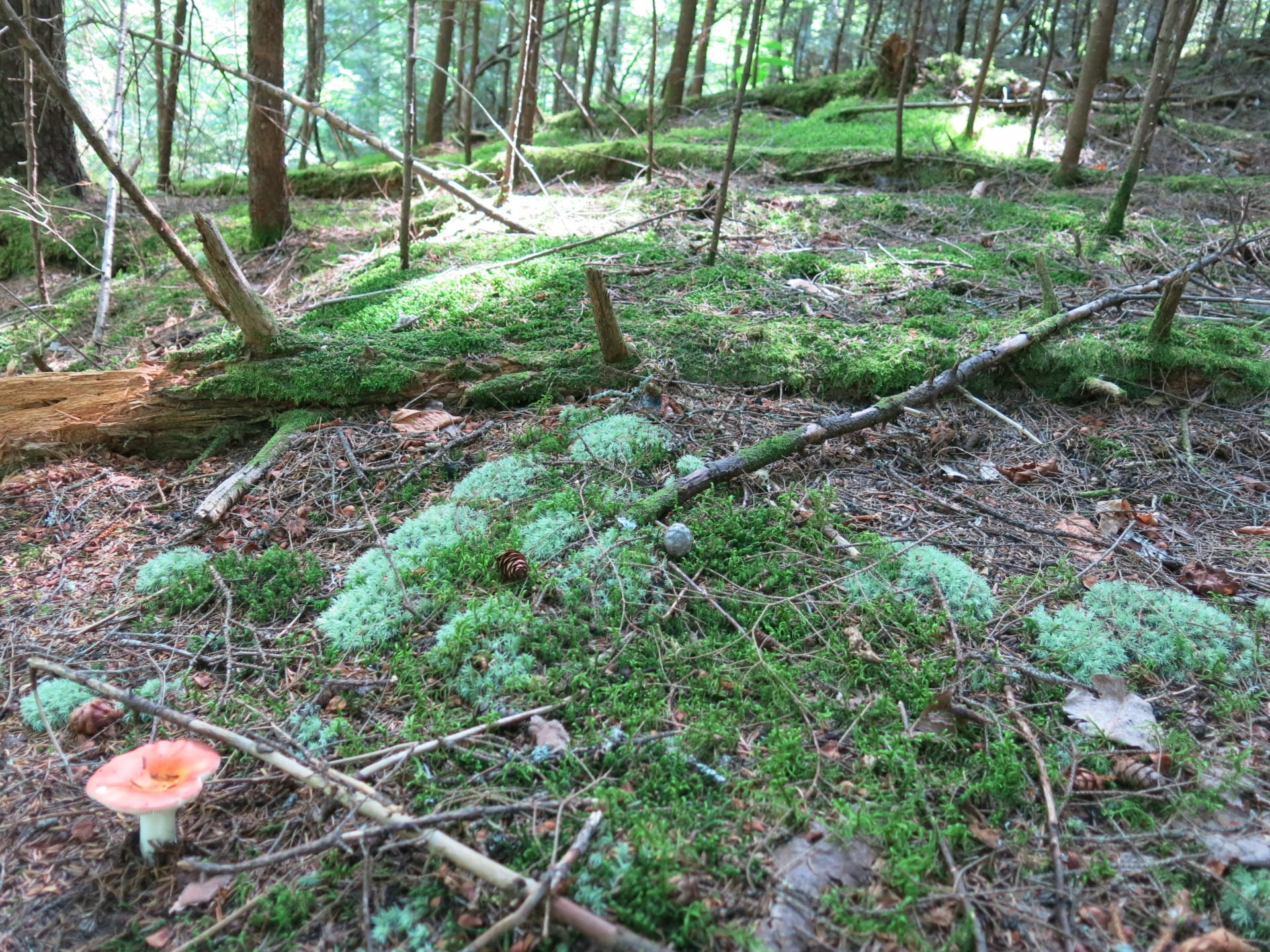 Seeing the Potential of Wood-Inhabiting Fungi in the Managed ... on woodland garden area, woodland garden trail, woodland garden shade, woodland garden stream,