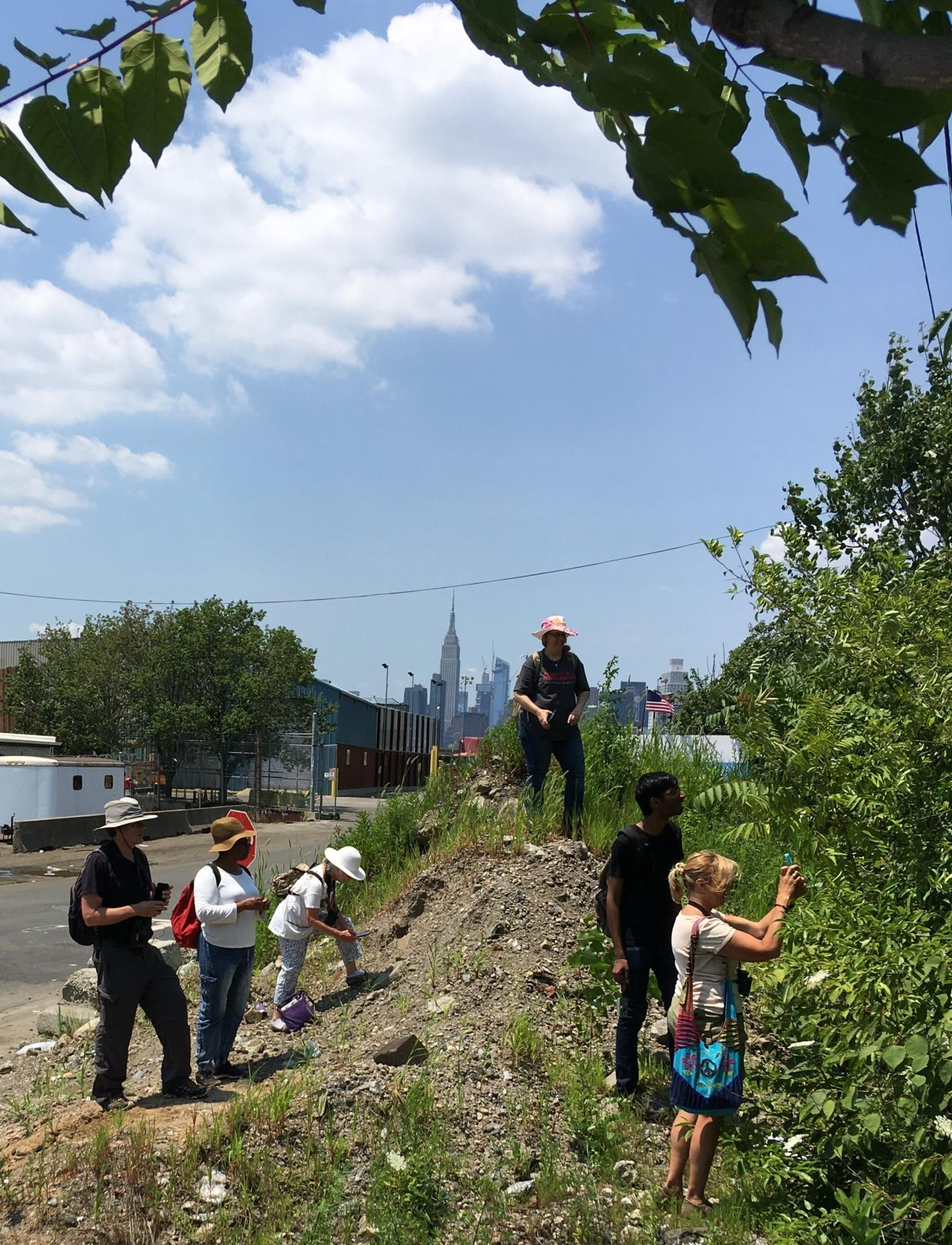 New York Flora Association Blog: Documenting The Spontaneous Flora Of New York City With