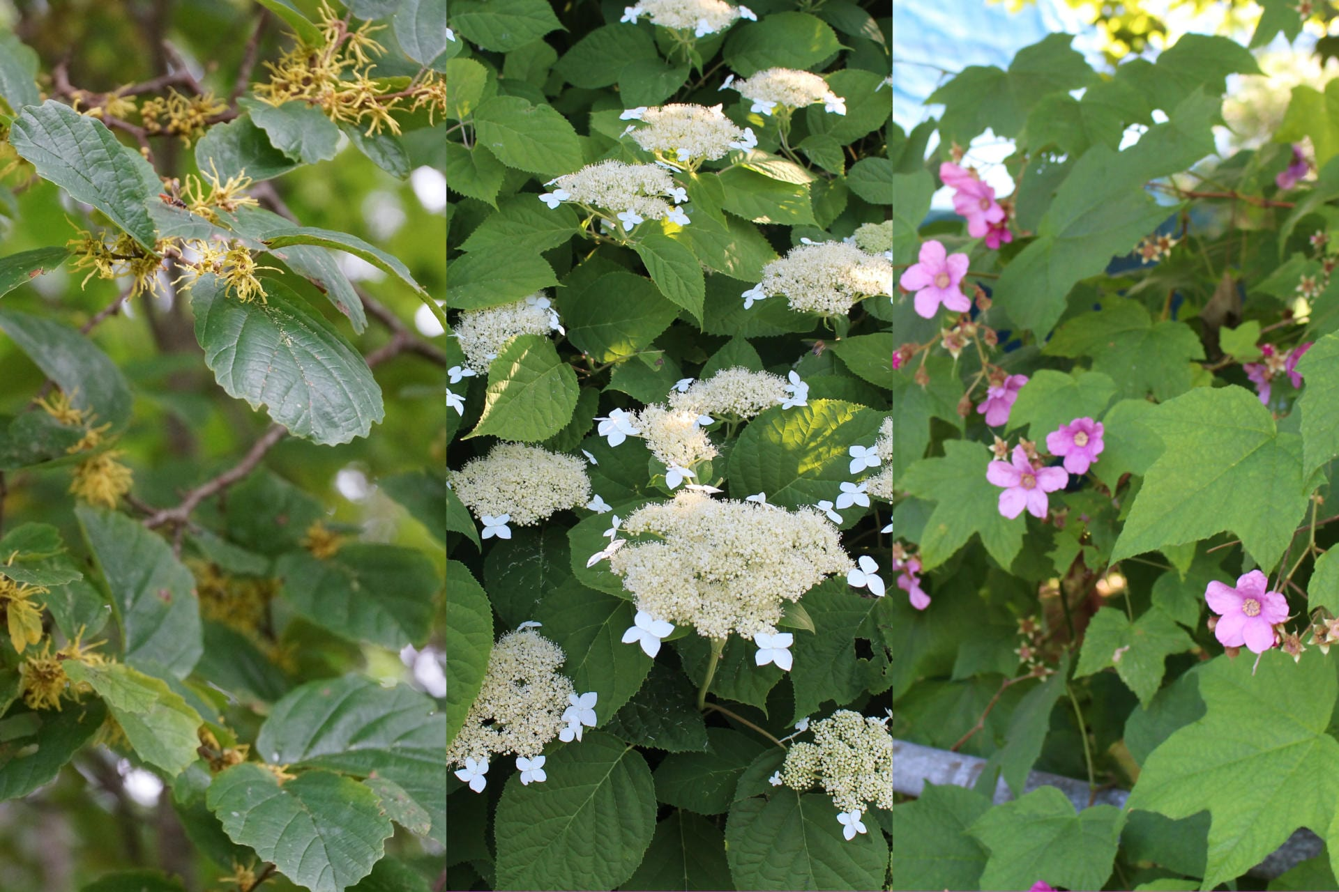Native Hedges And Hedgerows Beauty And Biodiversity Ecological