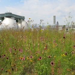 Urban Landscape Inspirations from Native Plant Communities