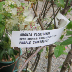 Nursery Stock Lists Seed Provenance Essex County 2