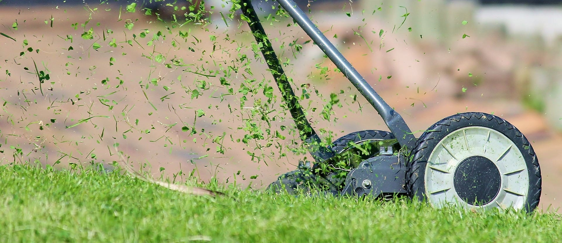 Environmental Benefits of Organic Lawns