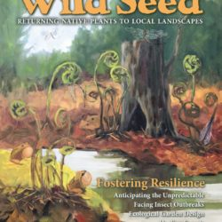 cover Wild Seed Project 2020 magazine