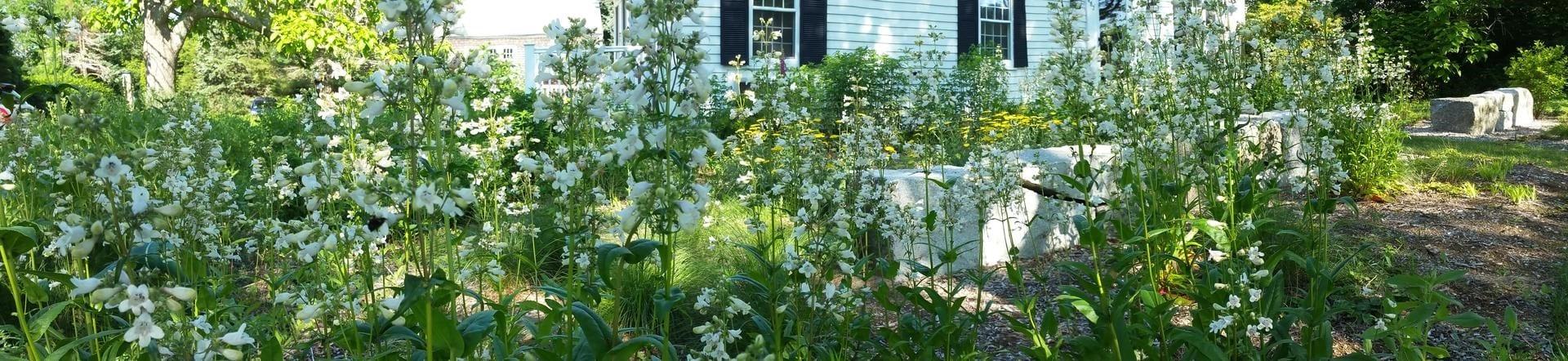 Celebrating Natives Garden Tour – Dennis, MA