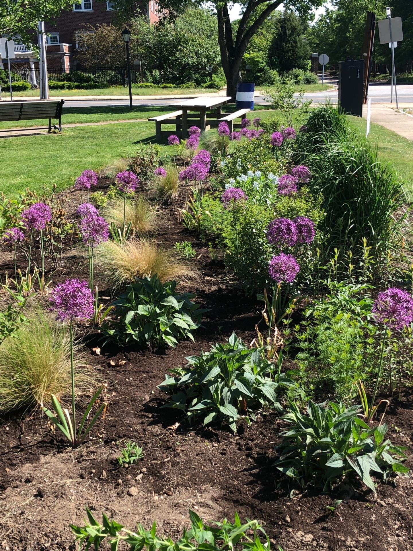 Celebrating Natives Garden Tour – Needham, MA