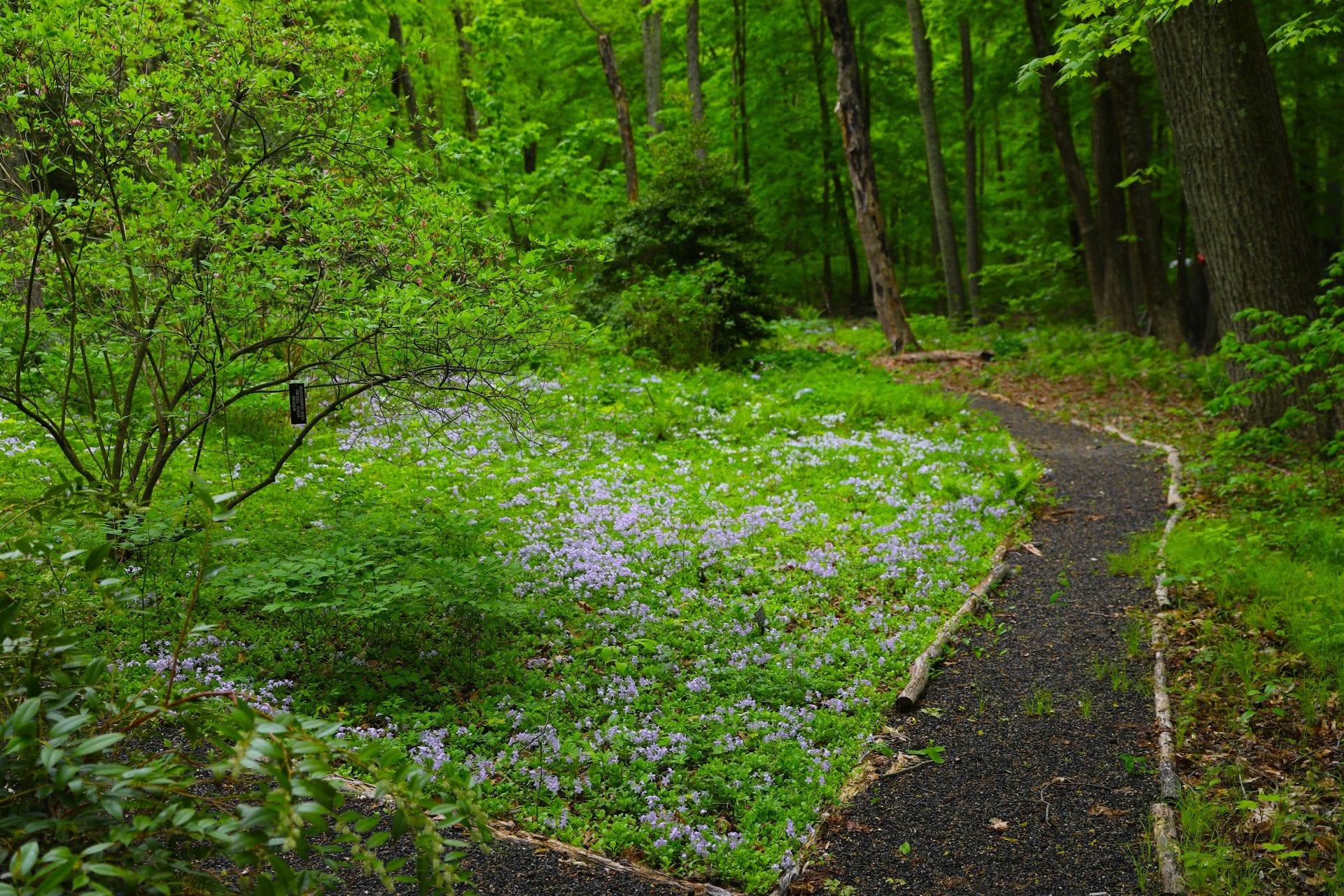 Celebrating Natives Garden Tour – Norcross Wildlife Sanctuary