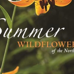 Summer Wildflowers Cover.cropped