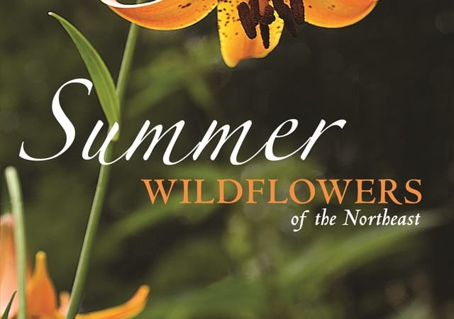 Book Review: Summer Wildflowers of New England