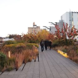 The High Line in New York City, inspired by wildness, but very high maintenance.