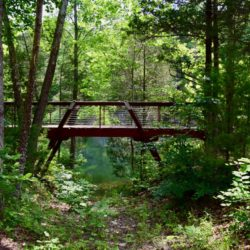 Two bridges allow the main trail to hug the quarry edges—and visitors to see the fish swimming below.