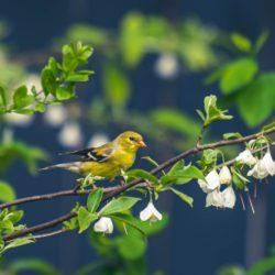 Gleanings bird photo DSC_5451 (3)