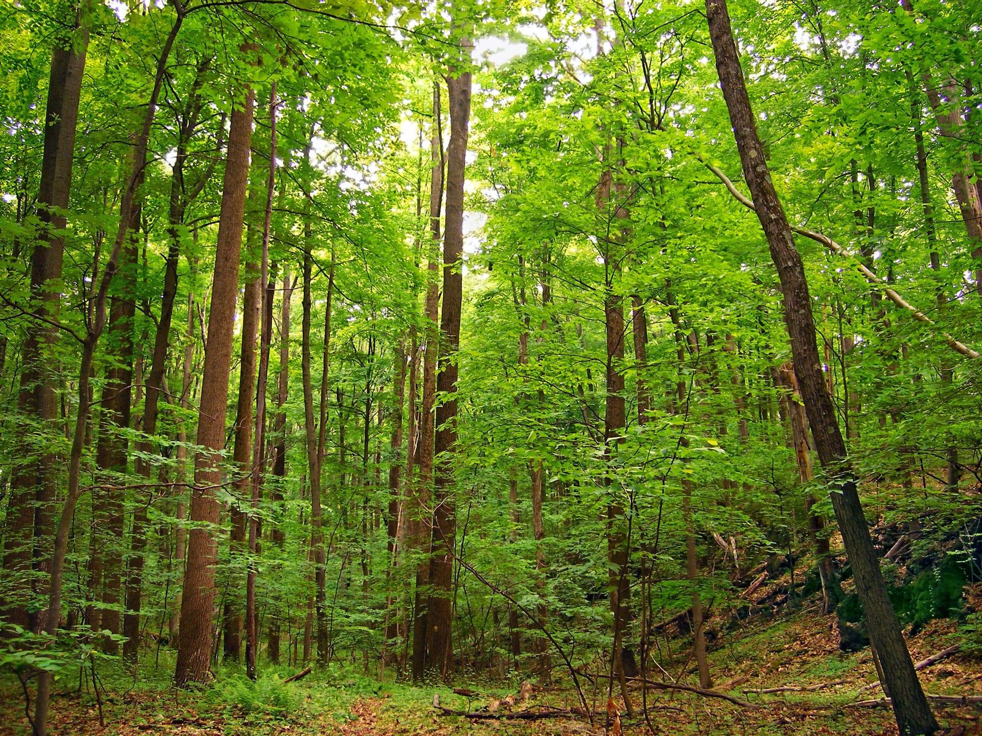 Tree Decline, Dieback, and Death